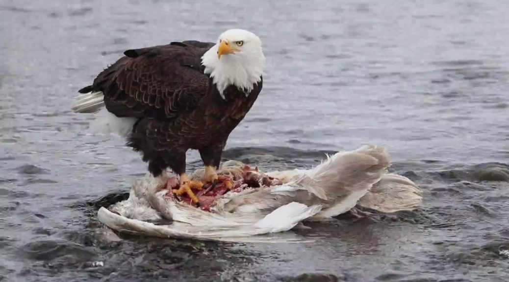 Moord aan Zee